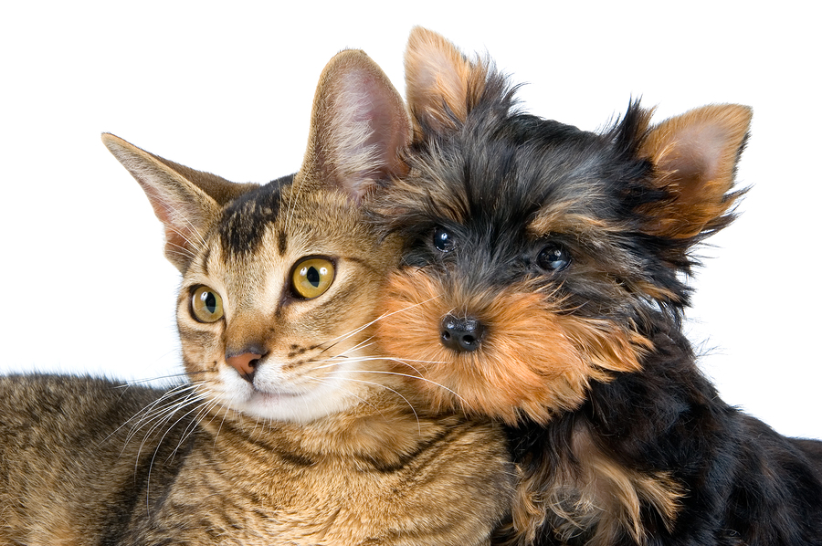 bigstock-The-Puppy-And-Kitten-2183521