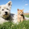 Alternative Pet Care Solutions